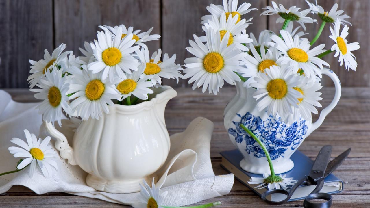 Найти цветов ромашки